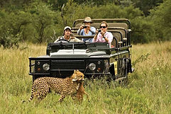 Mala-Mala-game-reserve-Cheetah-kill-1.jp