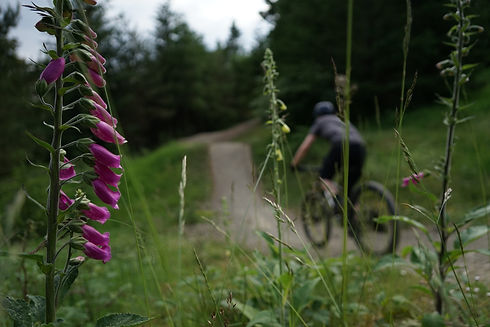 Nature Foxglove rider.JPG