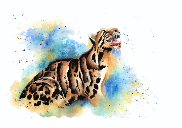 Cahaya The Clouded Leopard
