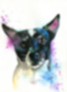 DogBenson.jpg