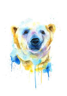 Aurora the Polar Bear