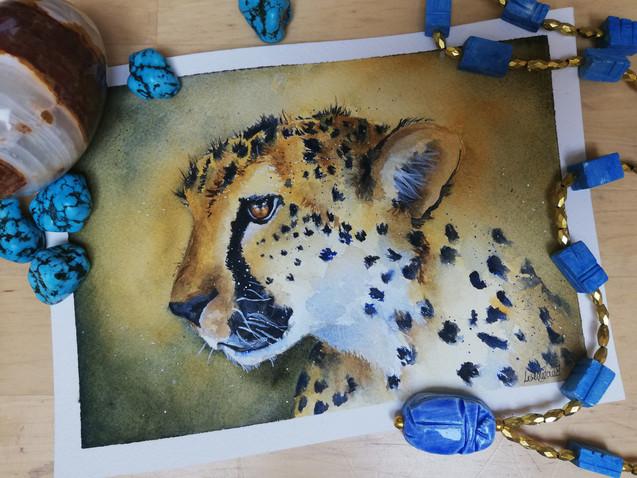 Dumi the Cheetah