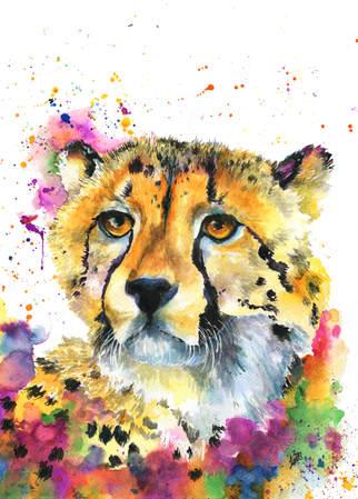 Rainbow the Cheetah