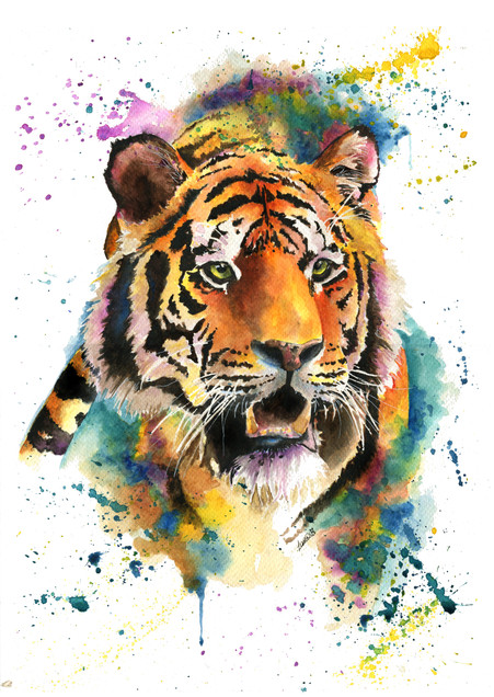 Anoushka the Tiger