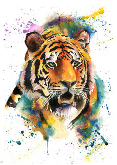 Anoushka the Tiger