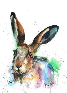 Maisy the Hare