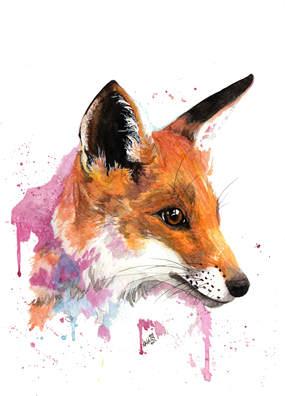 Maple the Fox
