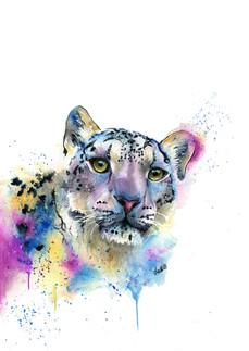 Luna the Snow Leopard