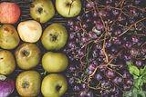 Pommes et cie ©BGillot.jpg