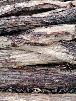 Bark Texture 5