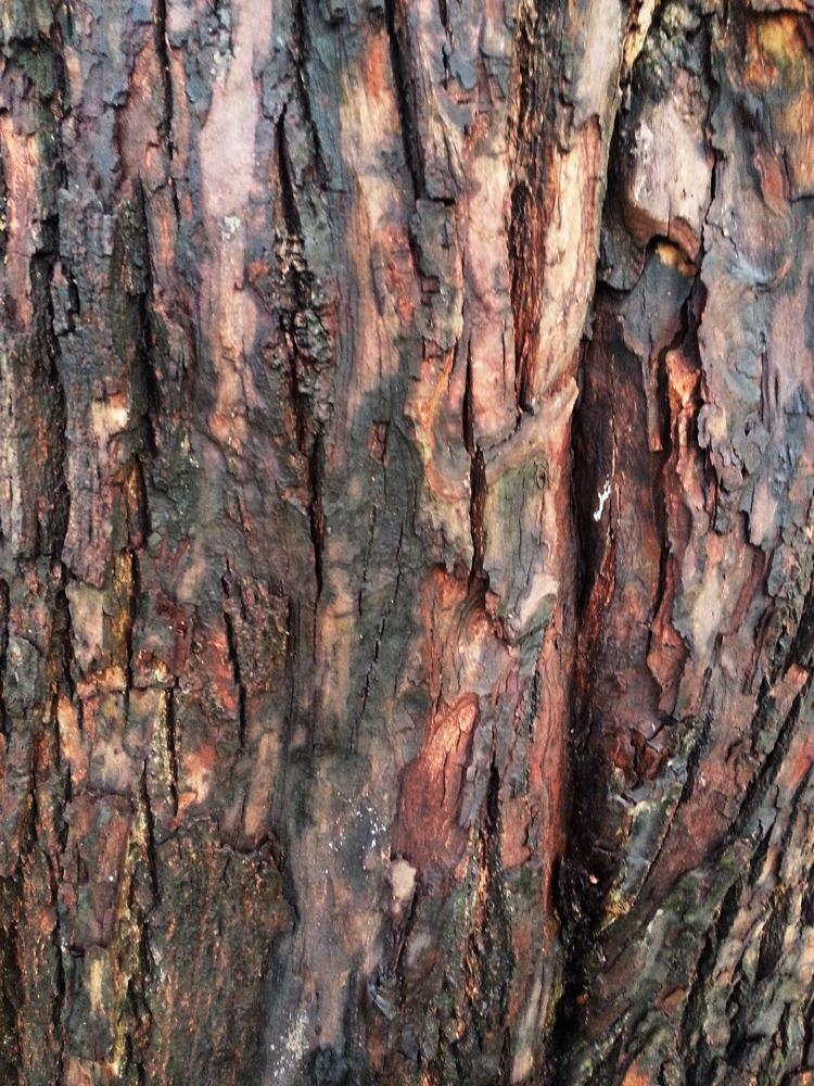 Bark Texture 3