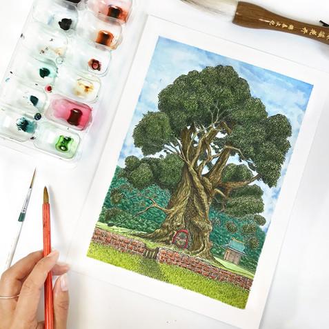 Mystic Japanese Camphor Tree