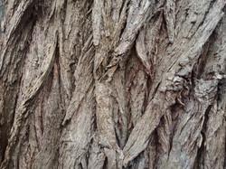 Bark Texture 4