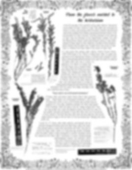 Herbarium-Poster-preview.jpg