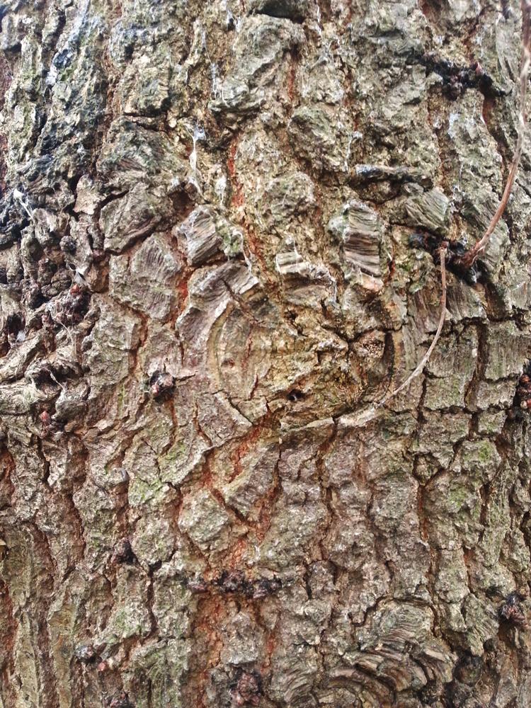 Bark Texture 10
