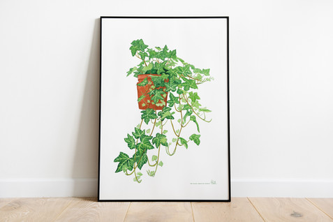 Ivy Illustration