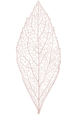 Download Leaf Skeleton PNGClick for