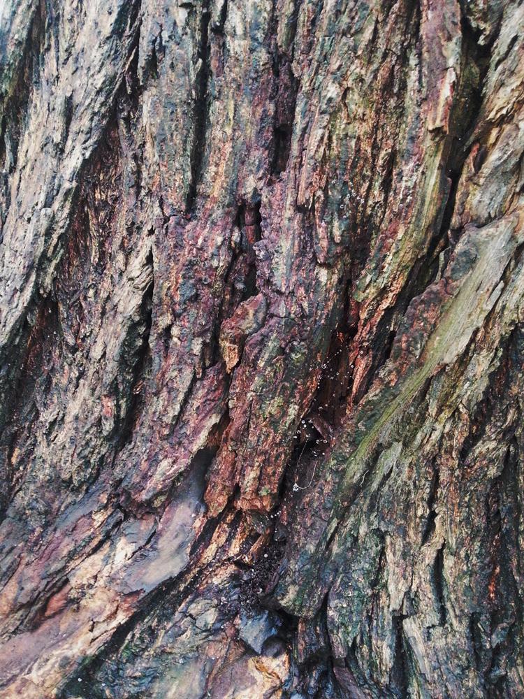 Bark Texture 6