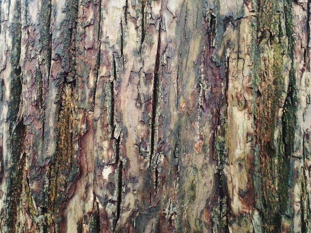 Bark Texture 7