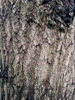 Bark Texture 9