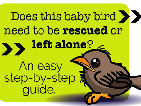Found a baby bird? Here's what you need to know.