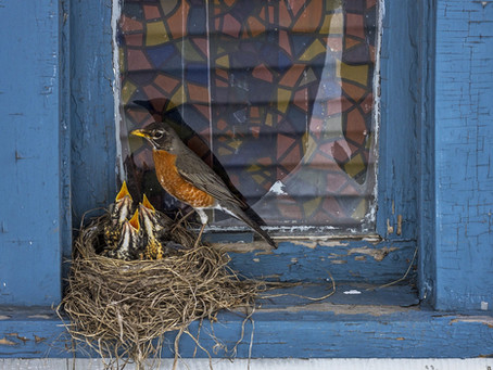 3 Ways to Effectively Prevent Birds from Hitting your Windows