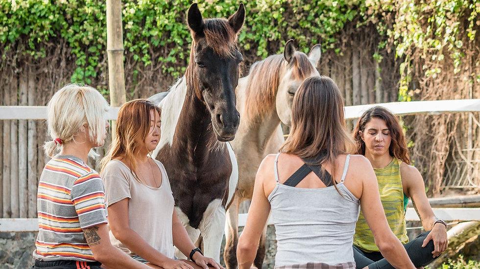 meditation-with-horses.jpg