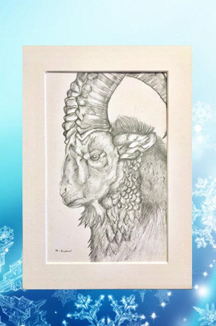 Original printed artwork - Ibex