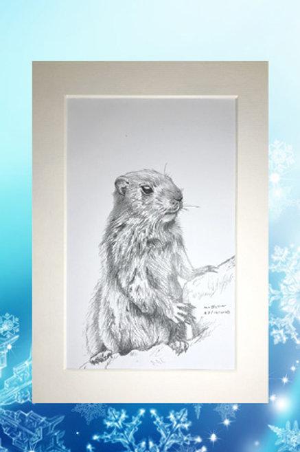 Original printed artwork - Marmot