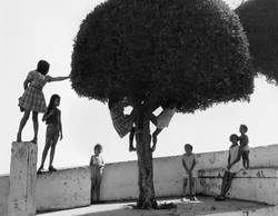 T1 Children's Tree