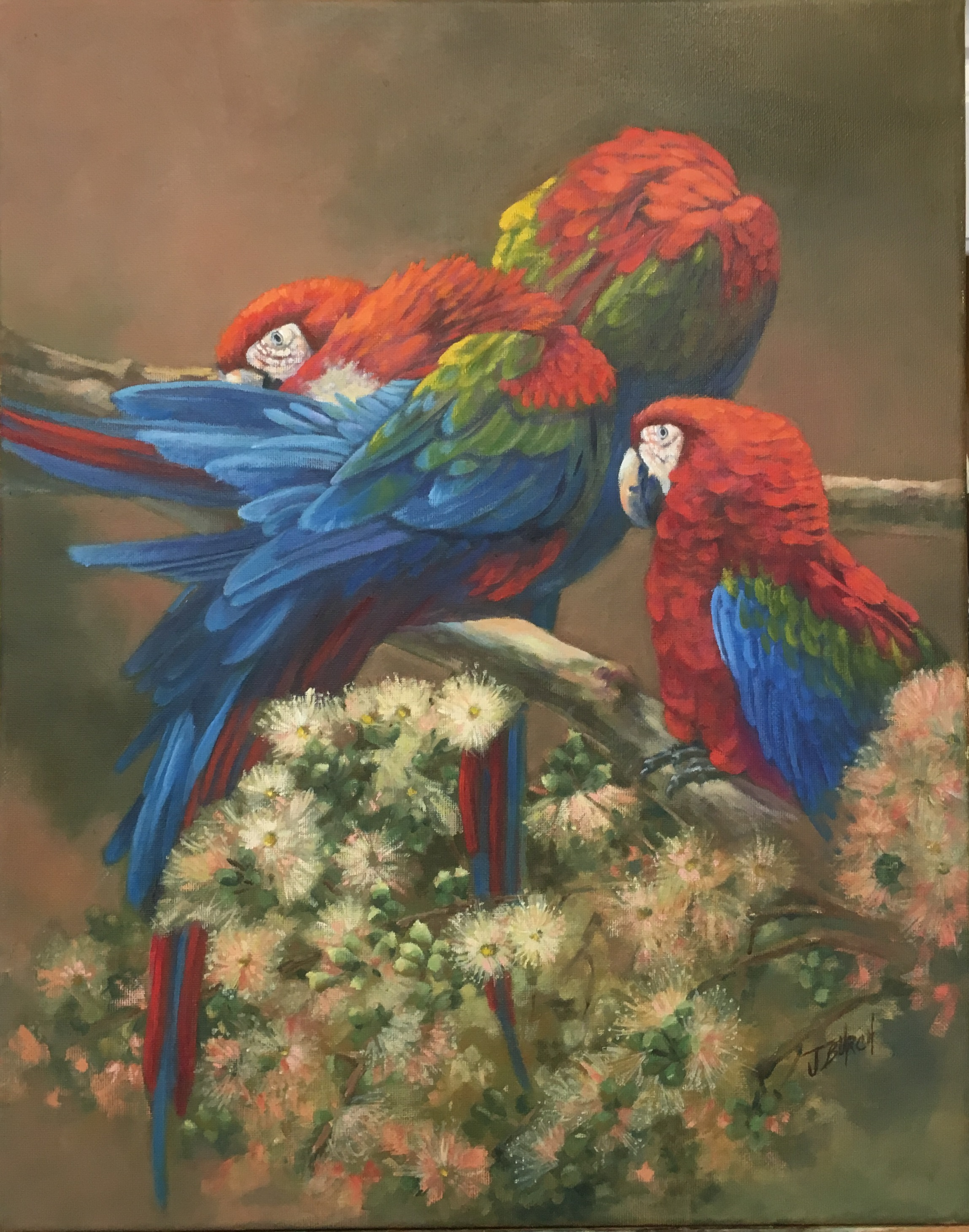 2017 Three Parrots 16 x 20 oil on canvas