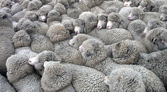 tas de moutons.jpg
