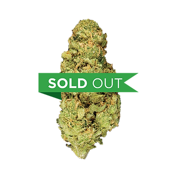 BLISSFULL SOLD OUT.png