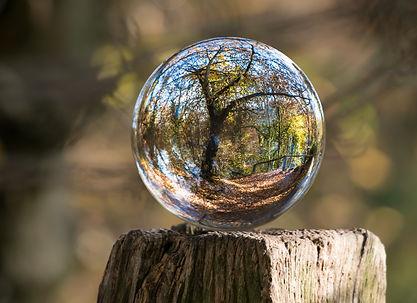 Bulle_forêt_pexels-photo-235615.jpeg