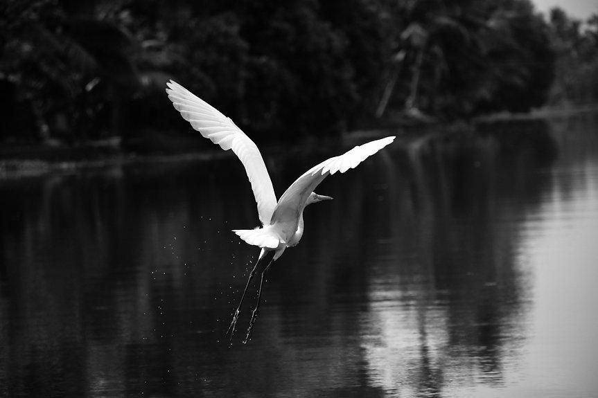 animal-avian-bird-674804.jpg