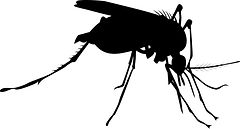 mosquito_GJMUsvId_L.jpeg