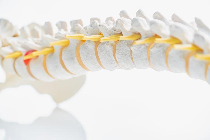 iStock-Spine.jpeg