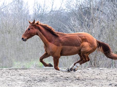 BEAUTY OF HORSES