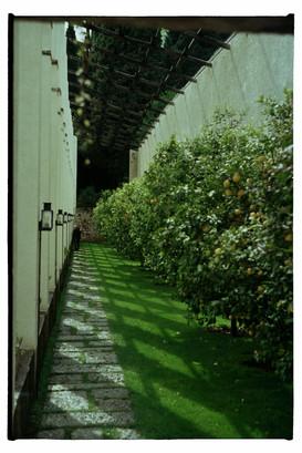 A limonaia (traditional lemon garden) of Gargnano