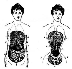 victorian era medical illustration