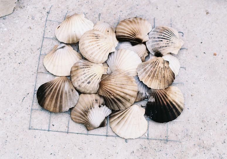 shells, in transformation