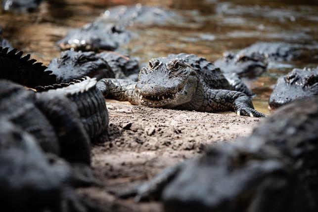 Orlando, Florida Photography - Gatorland