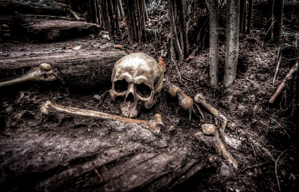 A macabre scene: the remains of a human skull peek out from the washed-out layers of the forest floor.