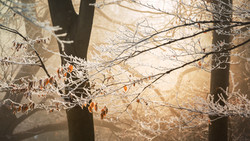 branch-bright-close-up-552793