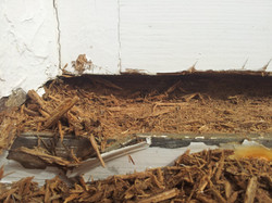Rotten timber repair Weston