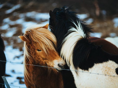 Let's be kind, and try and love people as much as we love the horses.