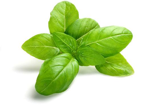 Infused Olive Oil-Basil