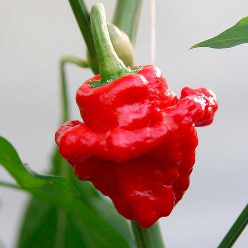 Scotch Bonnet Pepper-Red