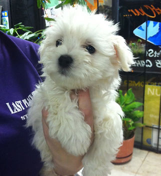 Last Place on Earth Pet Shop | Puppies