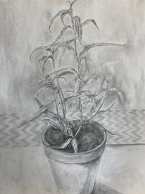 Plant Series 04, Vietnamese Coriander